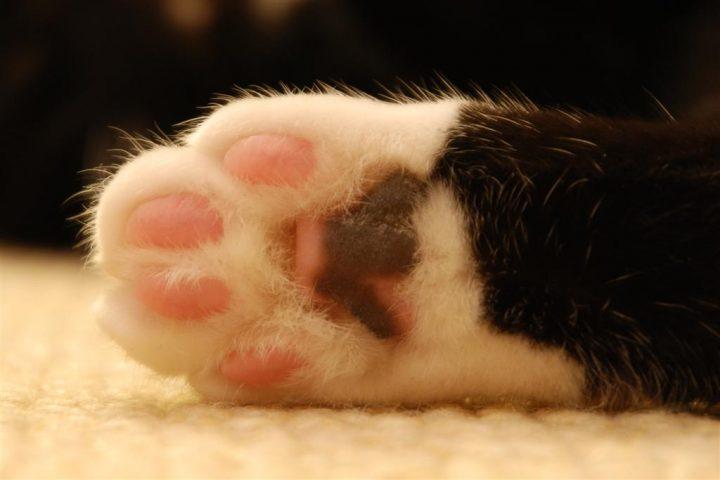 猫の手も借りたい(ほど忙しい)は英語でなんと言う
