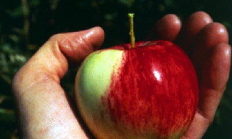 英語脳メルマガ 第02719号 There are a lot of food myths out there, so WIRED's decided to の意味は?