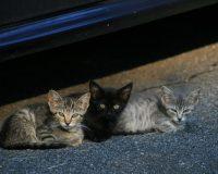 英語脳メルマガ 第02988号 Today, my neighbor let me know that they've been taking care of my cats の意味は?