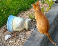 英語脳メルマガ 第03009号 Today, I learned that our cats love to knock over glasses and cups の意味は?