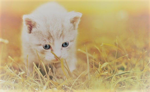Cat cute kitten cat baby pet animal charming cat cute kitten cat baby pet animal charming voltagebd Image collections