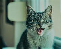 英語脳メルマガ 第03254号 Today, my insanely religious 60-year-old neighbor screamed at me when I left my home の意味は?