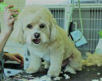 英語脳メルマガ 第03485号 Today, while picking up my dog from the groomer. の意味は?
