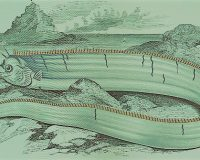 英語脳メルマガ 第03622号 A number of oarfish, a rarely seen deep-sea species, have been detected. の意味は?