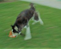 英語脳メルマガ 第03723号 Today, a dog came into my yard. の意味は?